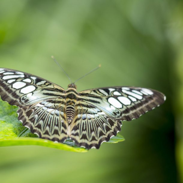 Butterfly Park - Tourist Places to Visit in Trichy